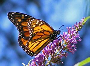 Фартуки для кухни - бабочки стрекозы